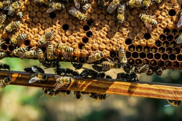 (碳同位素比质谱技术应用于检测蜂蜜成分)